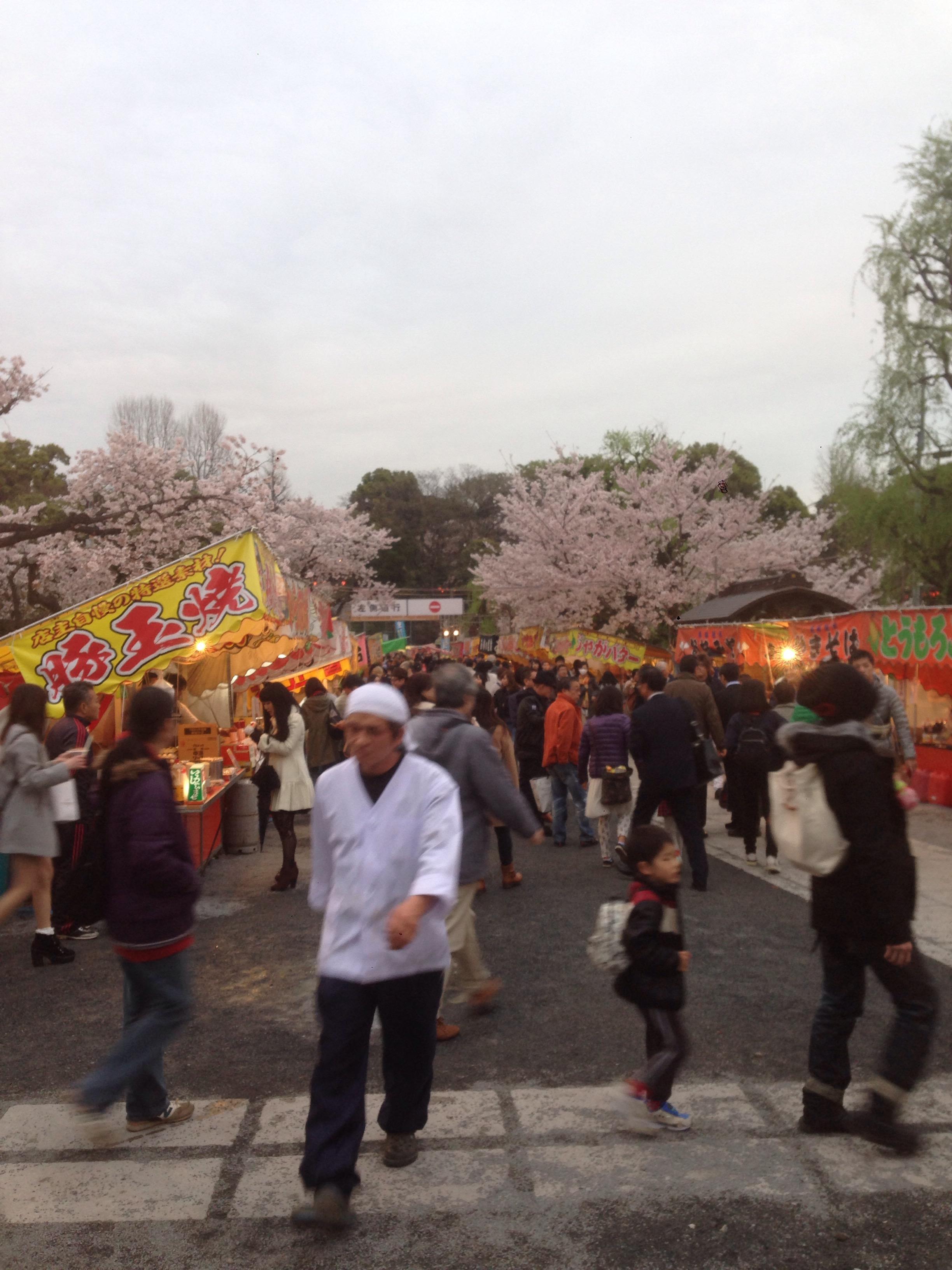 講習✖️後✖️桜